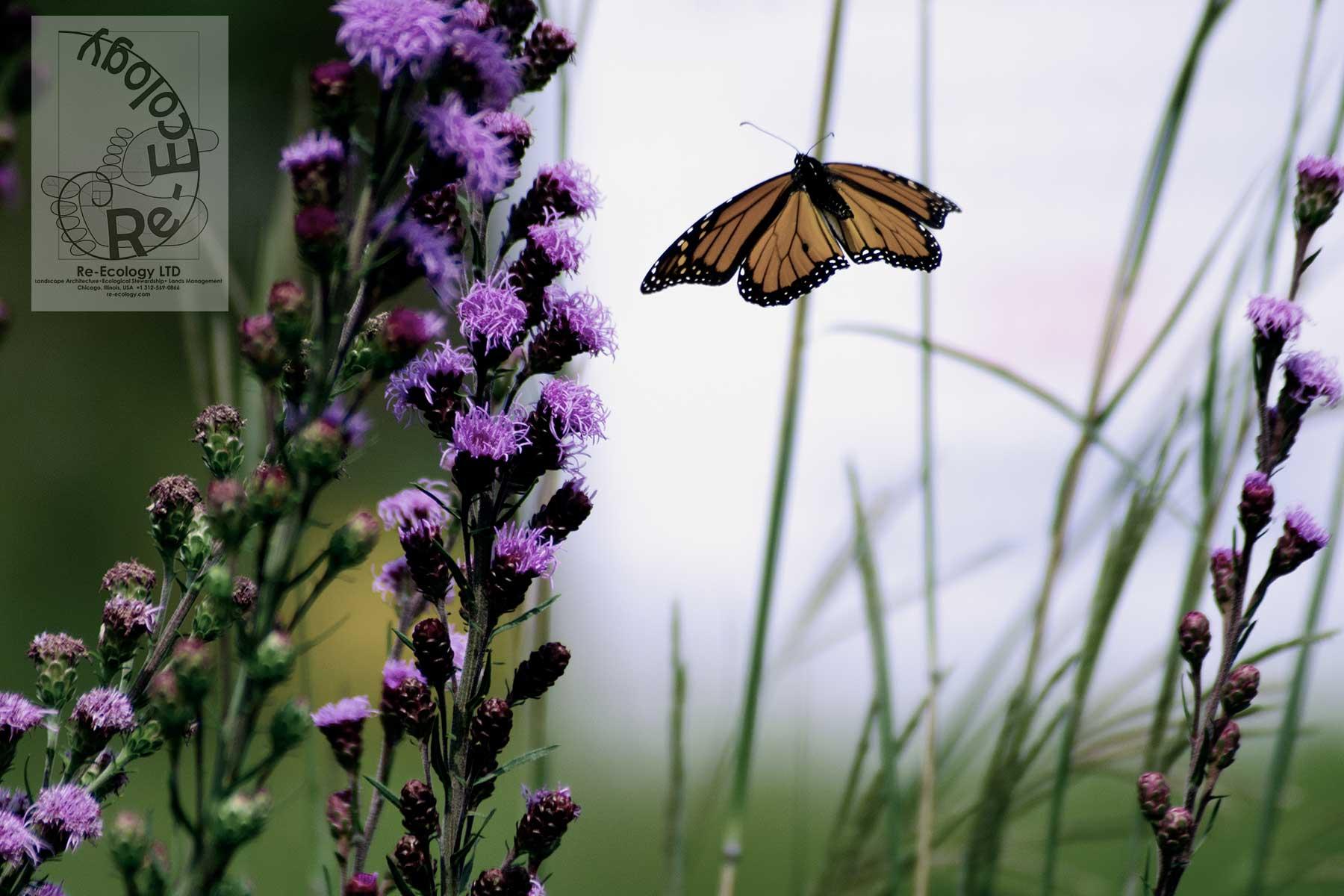 Want butterflies?